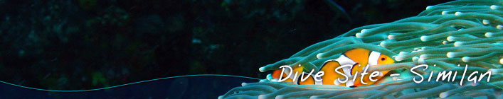 Liveaboard Diving Similan Islands - Anitas Reef