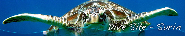 Liveaboard Diving Surin Islands